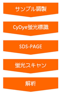 HyperPAGEの実験フロー
